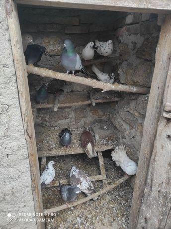 Продаю голубей !!!