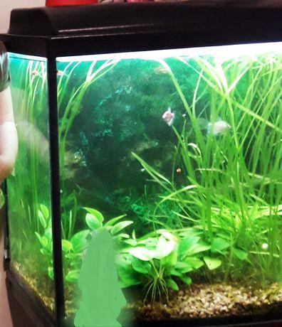 Продам аквариум на 200литров с крышкой, фильтром и подогревом для воды