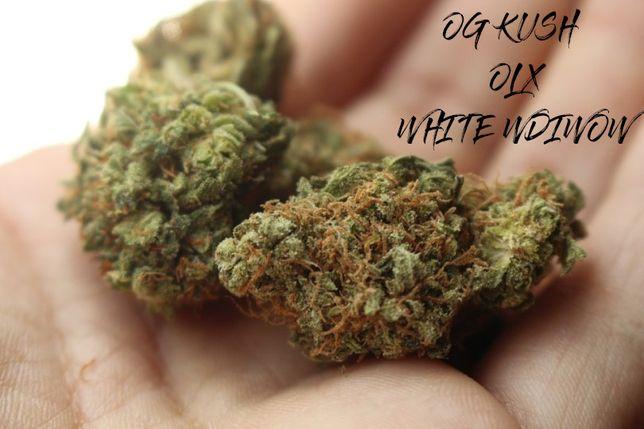 10 Sztuk Jointów WHITE WIDOW 45% Skręcony THC Susz CBD Legal Marihuana