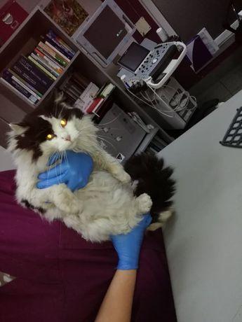 Zaginął kot