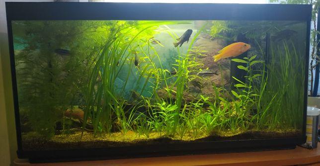 Akwarium 112L z pyszczami i filtrem UV