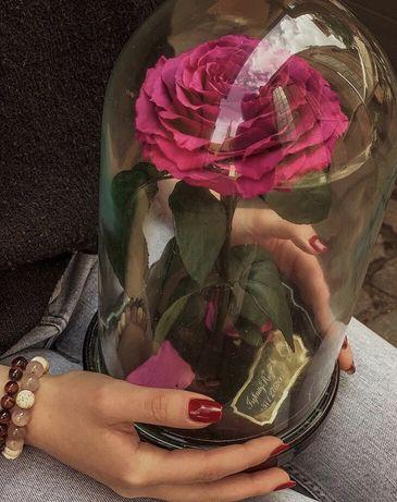 Роза в колбе / 32х22 / Подарок / Гарантия 3 года/14 февраля