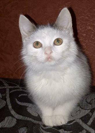 Бесплатно!!! Ищет дом котенок (девочка)