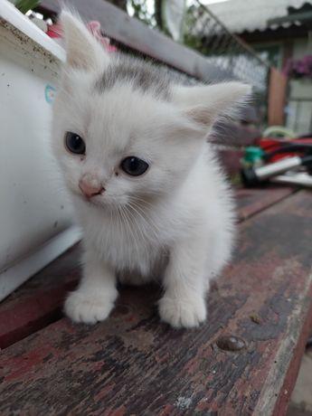 Віддам котики в хороші руки.