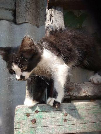 Котята бесплатно котики
