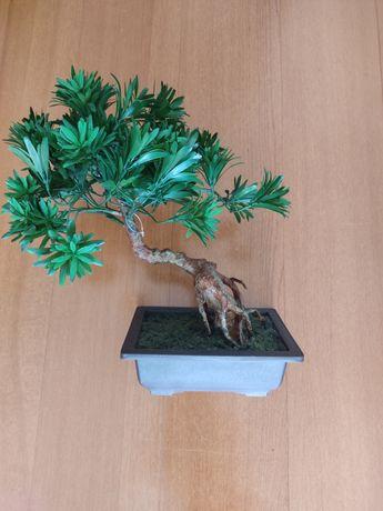 Bonsai Podocarpus artificial 50 cm