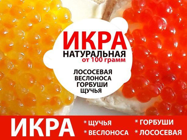Икра (натуральная) 100 грамм, 500 грамм, 1 кг