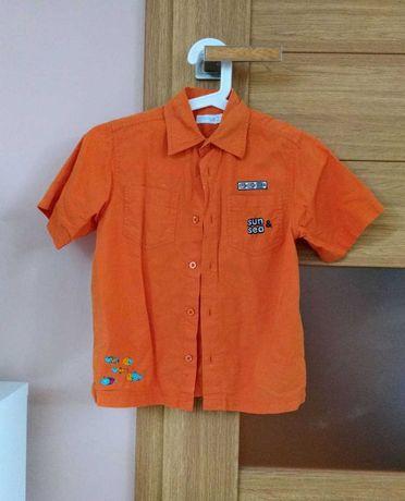 Koszula krótki rękaw 116