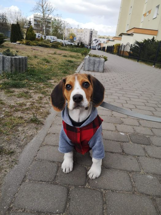 Ubranko dla psa! Bydgoszcz - image 1