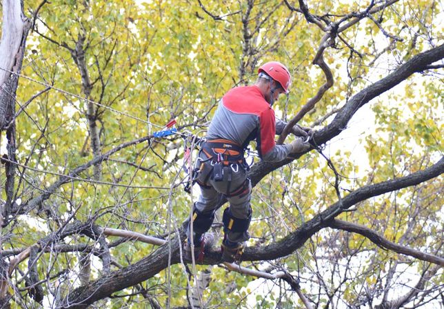 Обрізка дерев, кущів, стрижка газону, догляд за рослинами