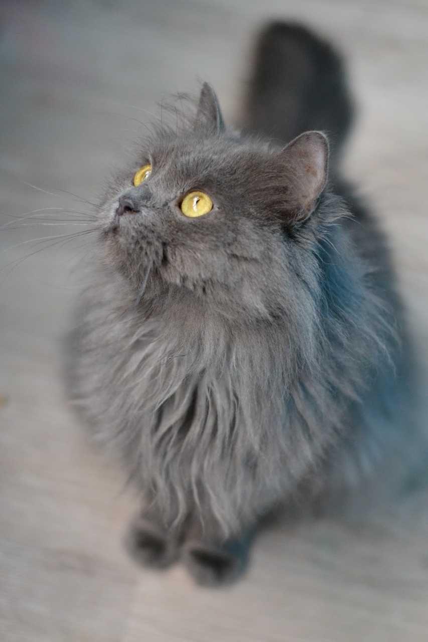 пухнастий няшний сірий кіт 1р