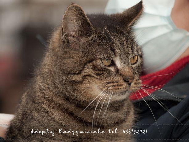 Adoptuj Radzyminiaka- kot Mateusz do przemyślanej adopcji