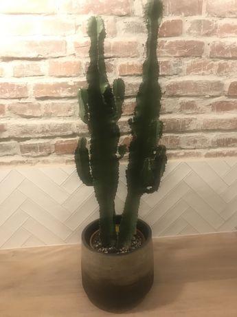 Euphorbia Ingens wilczomlecz wielki klejnot pustyni podwójny 100cm