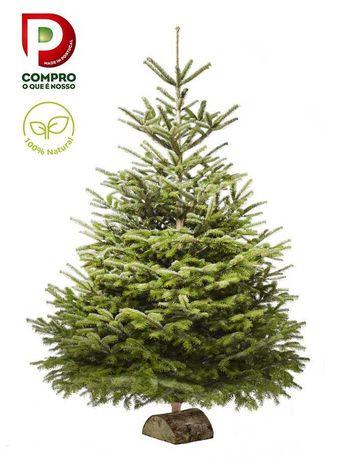 Arvore de Natal   Pinheiro de Natal Natural   Pre-Encomendas Abertas