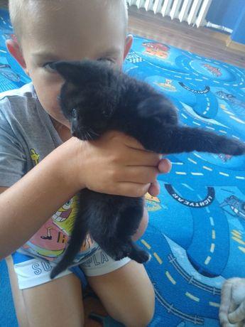 Oddam małego czarnego kota