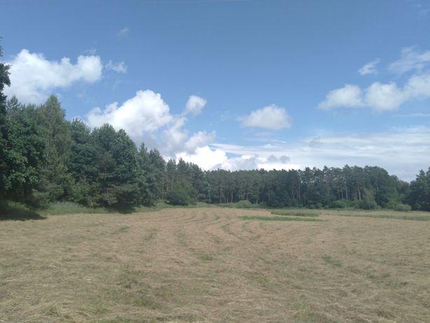0,5 ha działka pod Starogardem