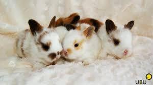 Масенькие мини кролики по доступным ценам
