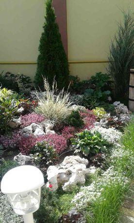 Озеленение.Садовничество.Рулонный газон.