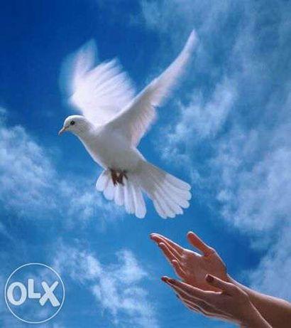 Белые голуби на выпускной,свадьбу и для души за 190 грн.пара