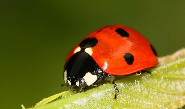 Korepetycje Biologia online, stacjonarnie przygotowanie do matury
