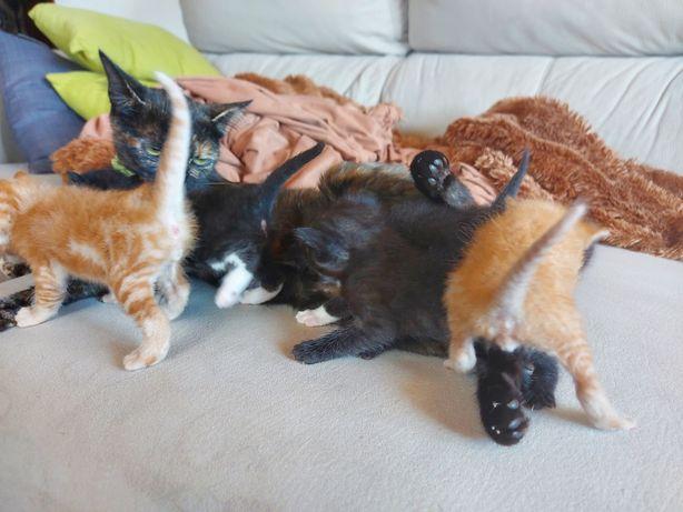 Dão-se Gatinhos bebés