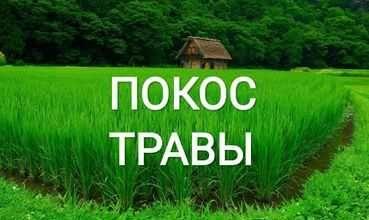 Покосить траву, бур'ян  прибрати територию, дiлянку вирубать чагарники