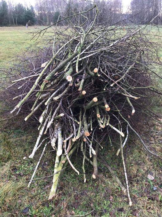 Oddam gałęzie. Głównie brzozowe. Sawin - image 1