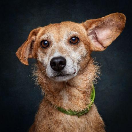 Nilo - cadela já esterilizada