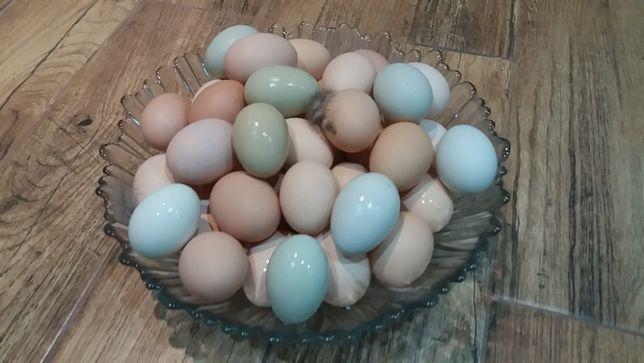 Jaja, jajka wiejskie zagrodowe
