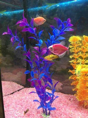 Planta decorativa para aquário