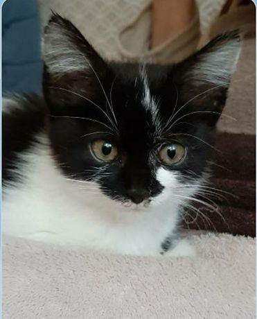 Котенок девочка - сирота