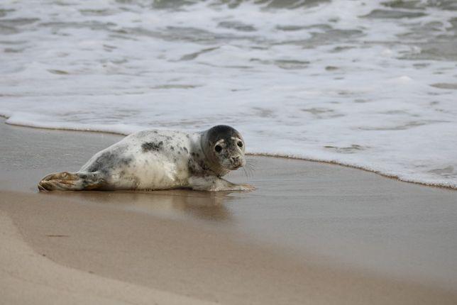 Wstąp do Błękitnego Patrolu-Pomoc ssakom i ptakom morskim