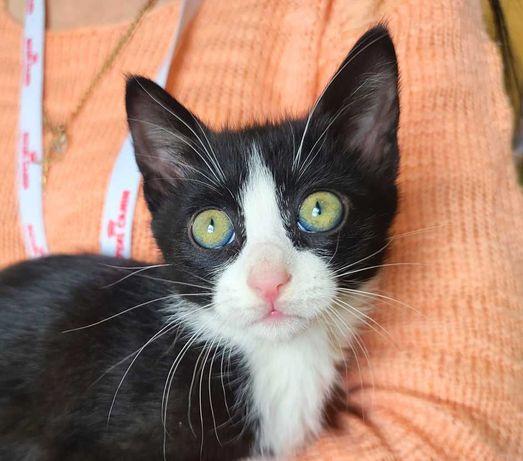Крошка-милашка, девочка Мальва, котенок 2 месяца