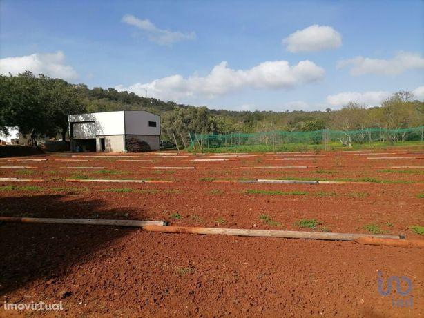 Terreno - 60000 m²