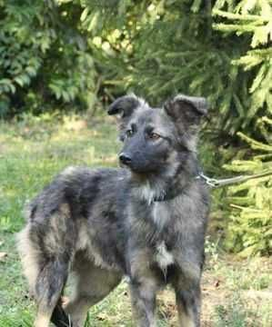 Красивая тихая собака среднего размера Мила, возраст 1 год