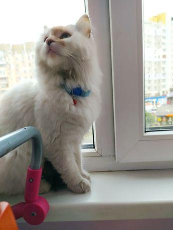 Найдена кошка пушистая, Позняки