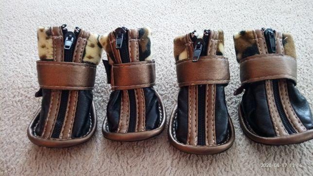 Обувь для йорка