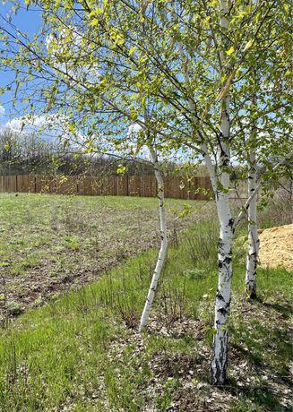 Участок земли возле леса