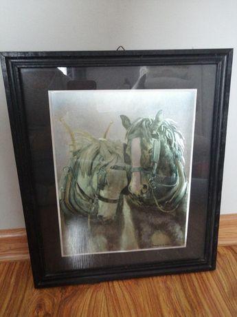 Obraz konie obrazek