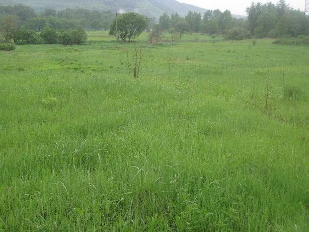 Земельный участок 3.06 га в курортной зоне Закарпатье сан.Синяк