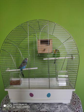 Sprzedam papugi faliste z klatką