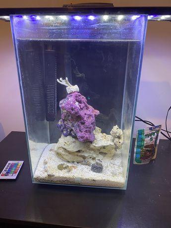 Aquario salgado e acessorios