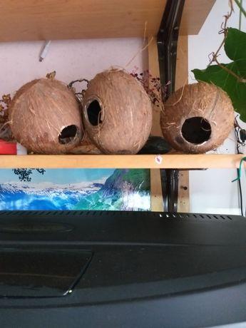Kokosy domki dla glonojady
