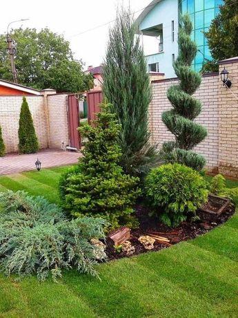 Ландшафтный дизайн, формировка деревьев.
