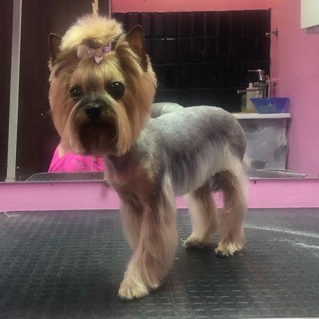 Стрижка собак и котов Оболонь груминг салон