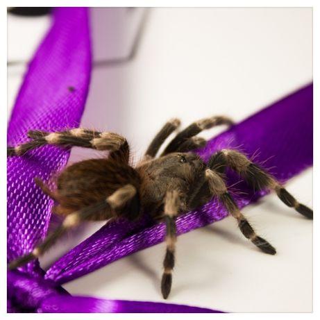 паук птицеед корм субстрат террариум набор подарок павук подарунок