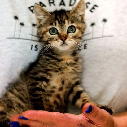 Малышка Сара ищет своего человека котенок котята кошеня кот кошка коте