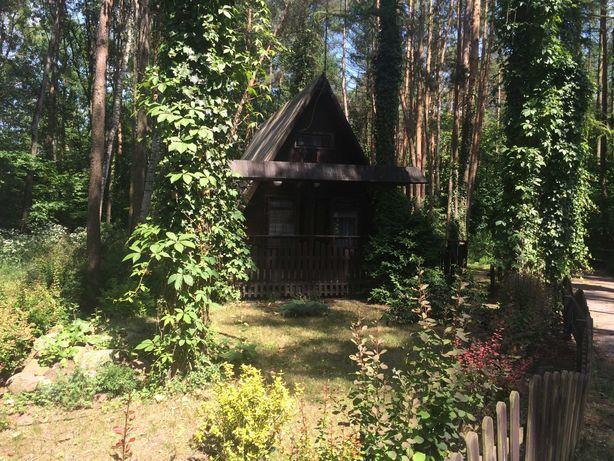 Wolnostojące domki w Skorzęcinie  ( Domki pod świerkami)