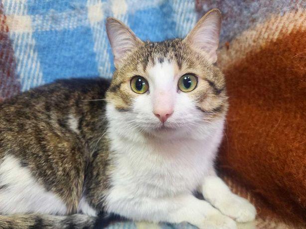 Генрі - забавний молодий котик 10 міс. Стерилізований кіт