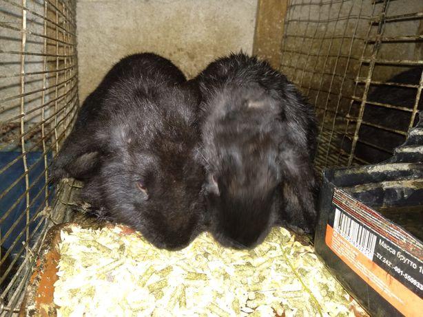 Кролики продажа вязка